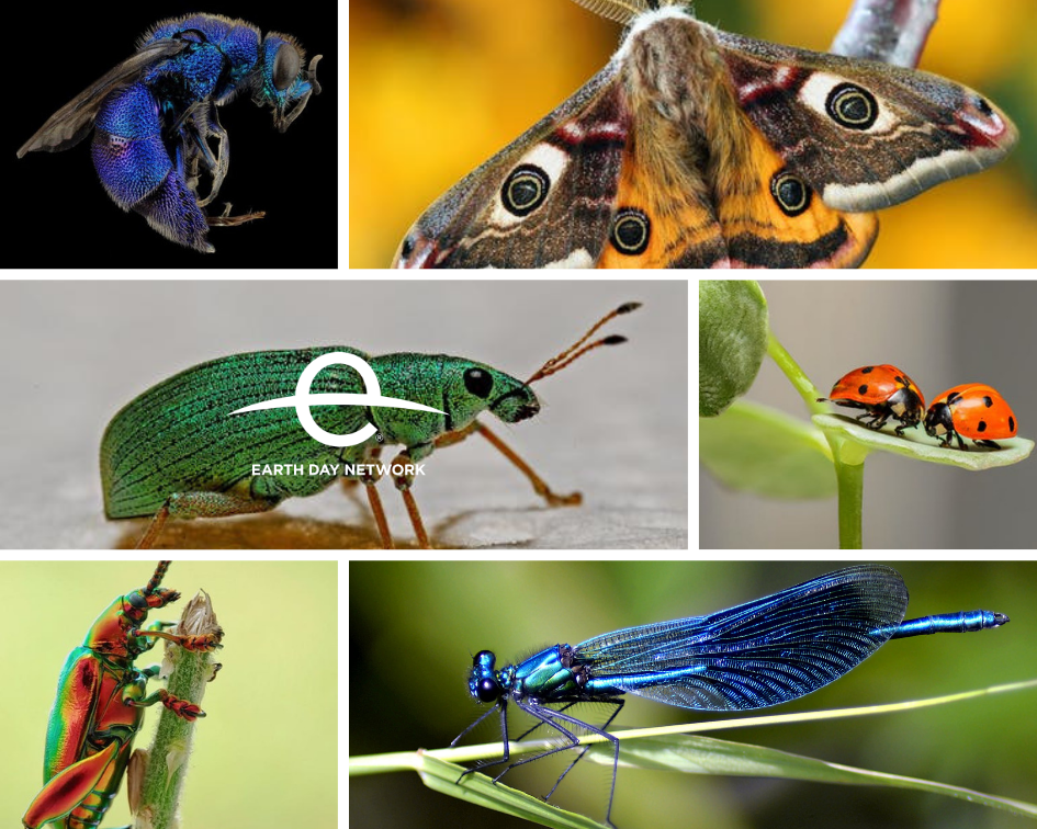 Earth-day-vital-insects