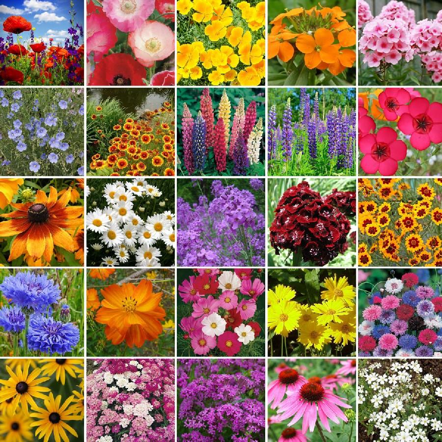 Planting-Your-Garden