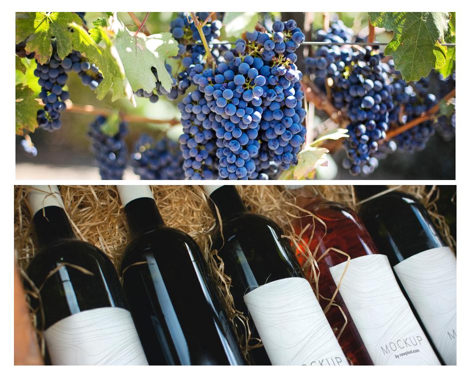 News-Wine